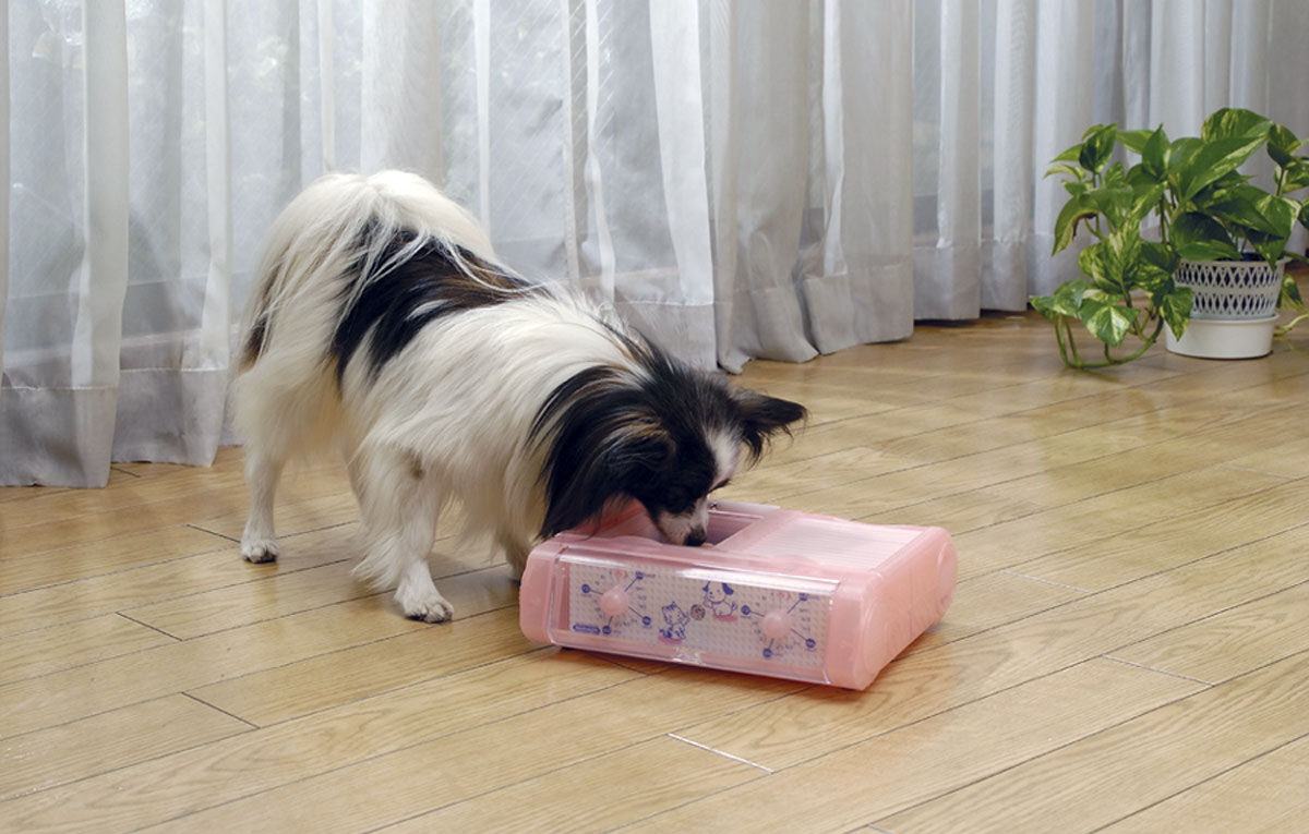 犬の自動給餌器
